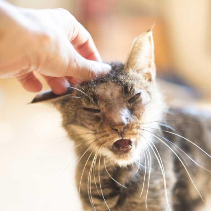몸도 마음도 약해지는, 나이 많은 고양이 보살피는 법 총정리