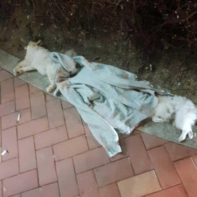 부산 해운대에서 흰색 포메라니안 3마리 투하...모두 사망