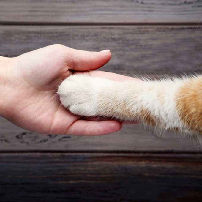 당신의 고양이로부터 찐하게 사랑받는 비법 8