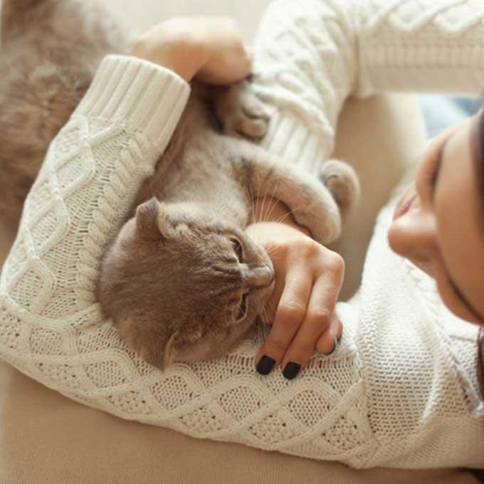 집사들이 고양이에게 배우는 6가지  삶의 지혜