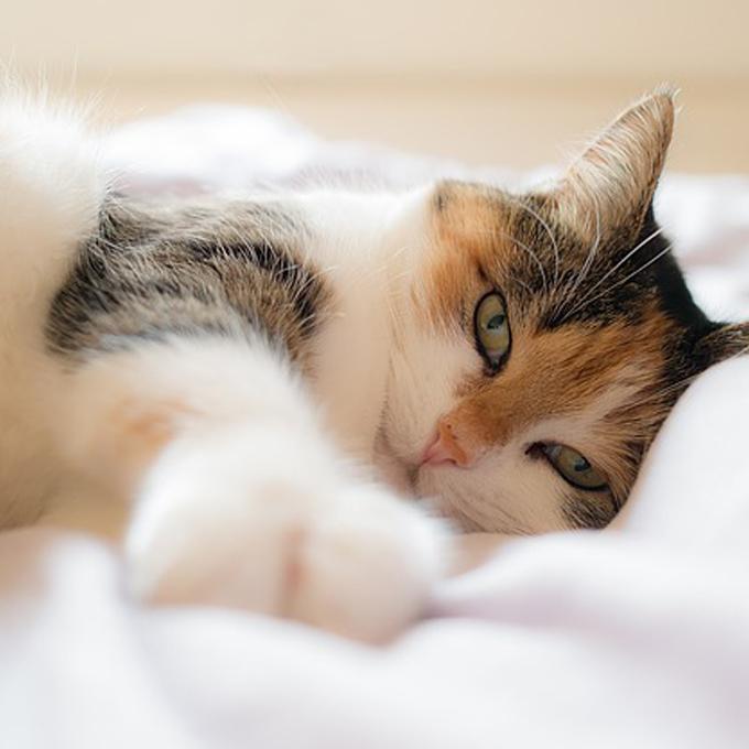 열에 아홉 고양이는 좋아하는 7가지