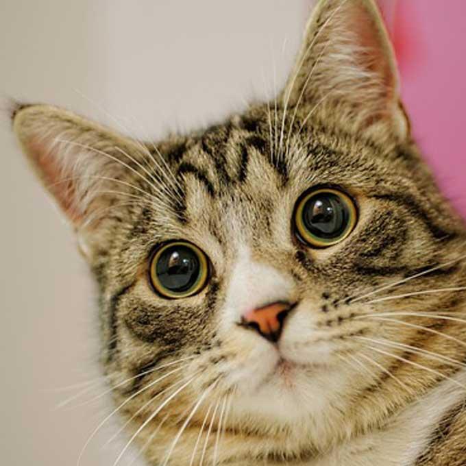 당신이 몰랐던 고양이 눈에 관한 놀라운 비밀 8