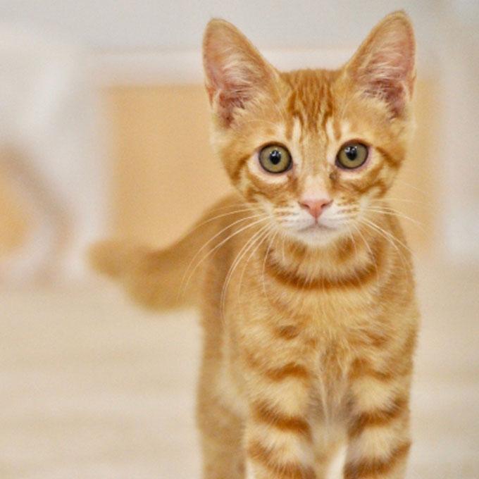 애정표현이 서툰 고양이가 하는 애정표현 5