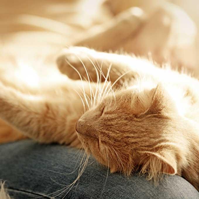 고양이가 좋아하는 집사 신체 부위와 자세 4