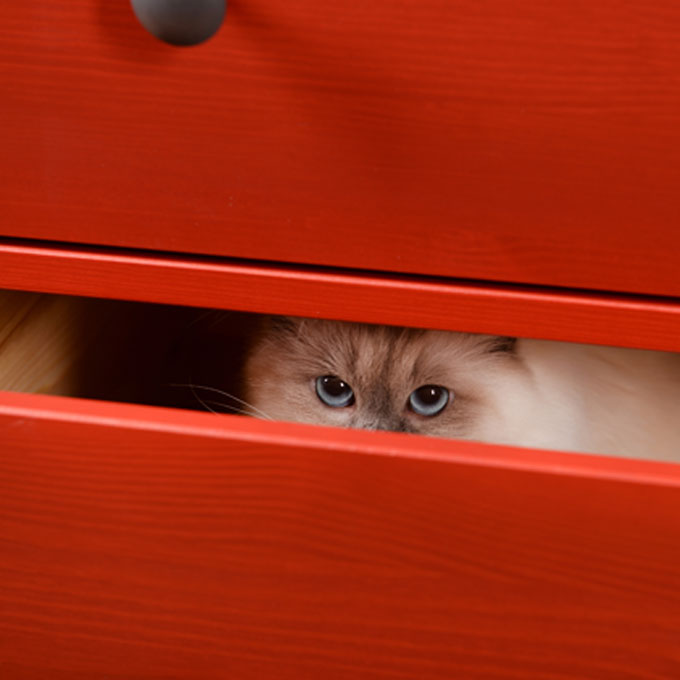 능청스러운 고양이 행동 4