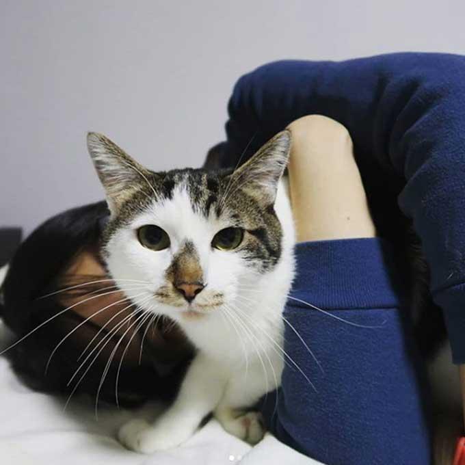 """""""건강하고 행복한 집사, 다 고양이 덕"""" 과학적으로 증명된 캣테라피 5"""