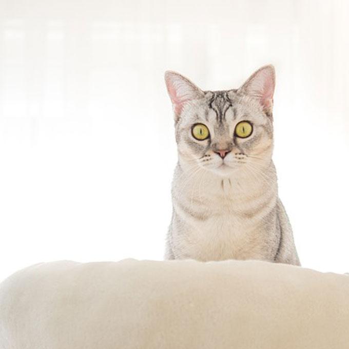 고양이를 갑자기 스트레스받게 하는 것 13