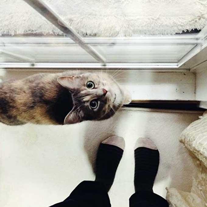 고양이가 집사와 함께 있고 싶을 때 하는 행동 5