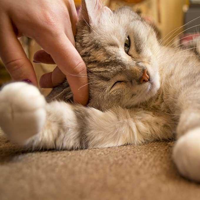 고양이 수명을 단축시키는 양육법 4