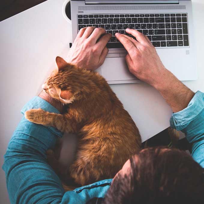 """""""냥이 더 많이 함"""", 고양이와 집사가 하는 애정표현 모아봤더니"""