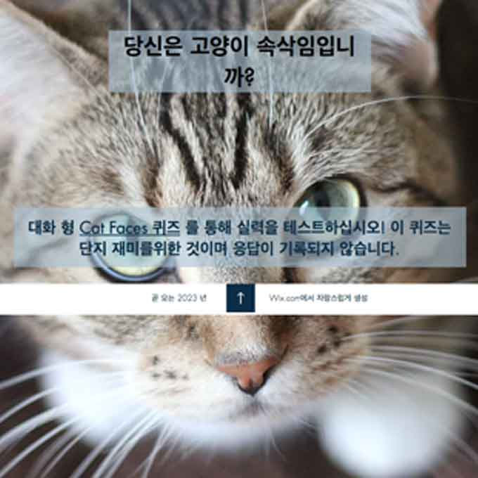 나는 얼마나 고양이 표정을 읽을 수 있을까, 셀프 테스트를 해보자