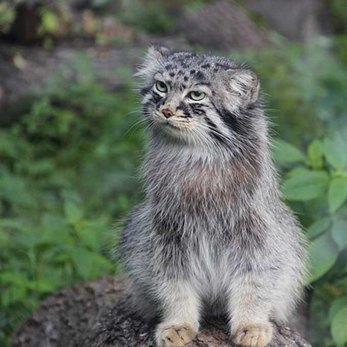 냥님인듯 아닌듯, '마눌은 어떤 고양이일까?