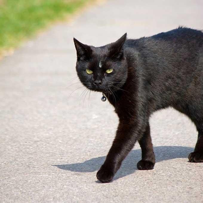 한국인의 편견을 깨부술, '검은 고양이'에 대한 새로운 고찰