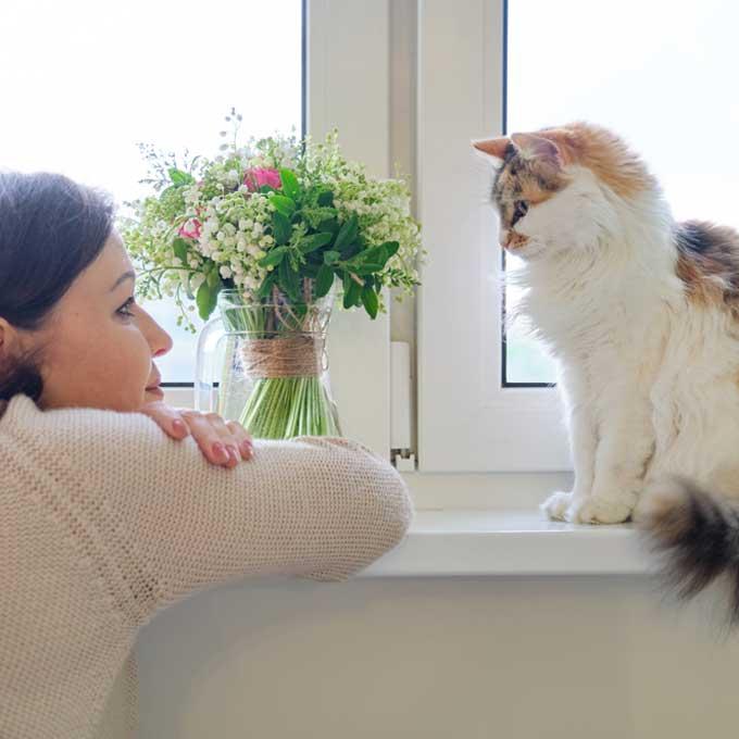 고양이와 유대감 높이는 말 걸기 요령 5
