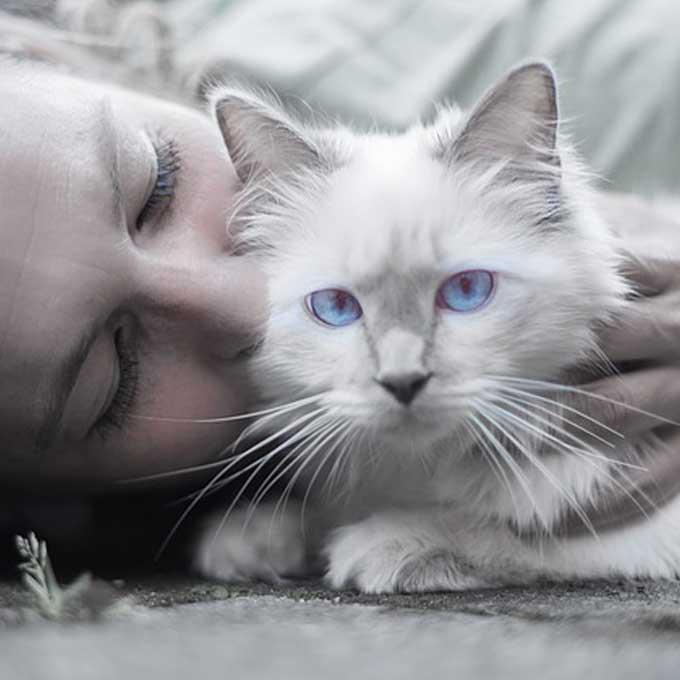 고양이가 싫어하는 집사의 나쁜 습관 5