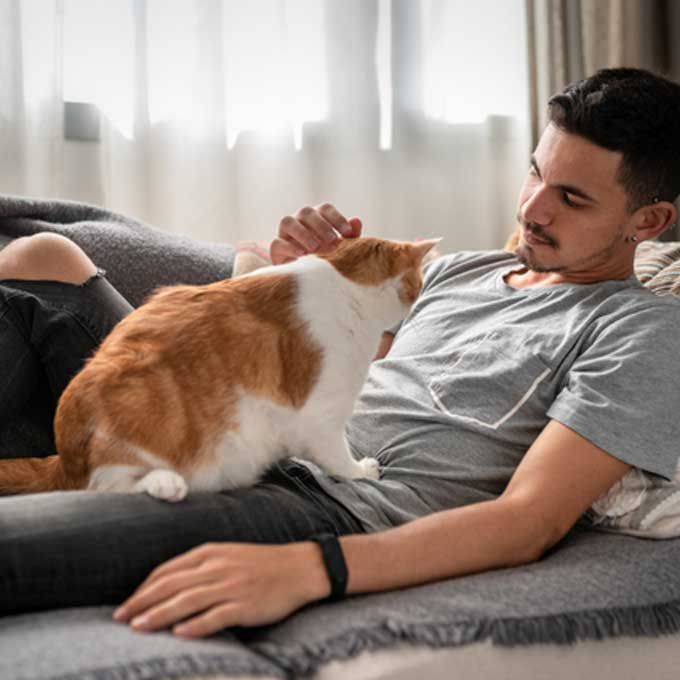집사가 슬퍼할 때 고양이가 하는 행동 4