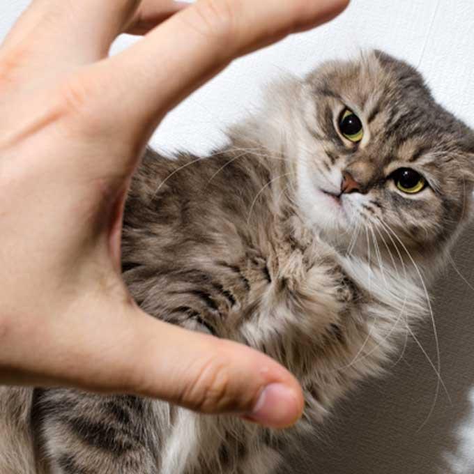 고양이가 싫어하는 행동을 계속할 때 일어나는 비극 4