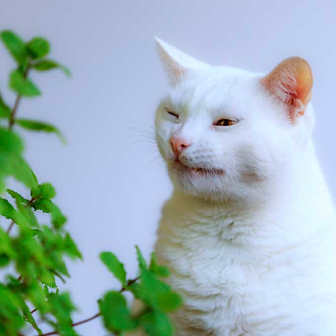 '냥이 몸에도 해로움', 고양이가 정말 싫어하는 냄새 5