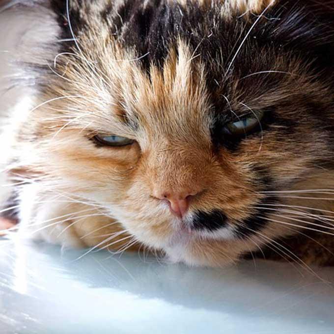 고양이가 고통을 숨이고 있을 때 하는 행동 5