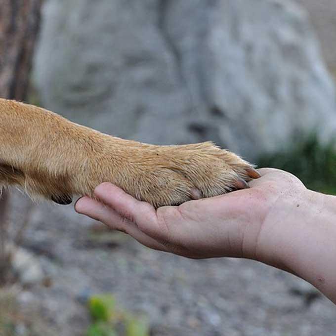 이번 동물보호법 개정안이 너무도 중요한 이유