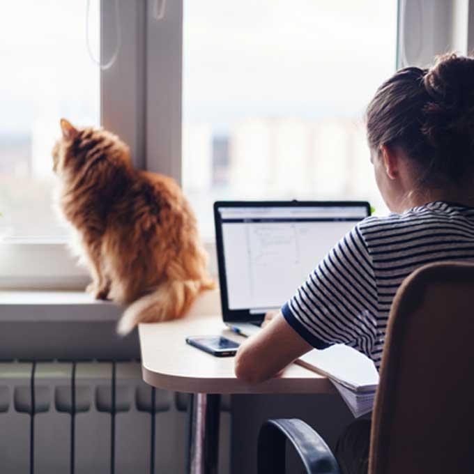 고양이 노화를 앞당기는 육묘법 5