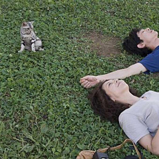 설 연휴 냥덕 집사들이 보면 좋은 고양이 영화 6선