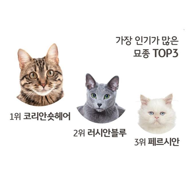 다른 집사들은 어떻게 고양이를 키울까