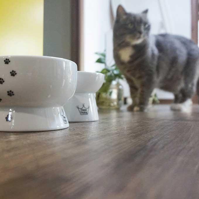 집사가 고양이를 실망시키는 순간 4