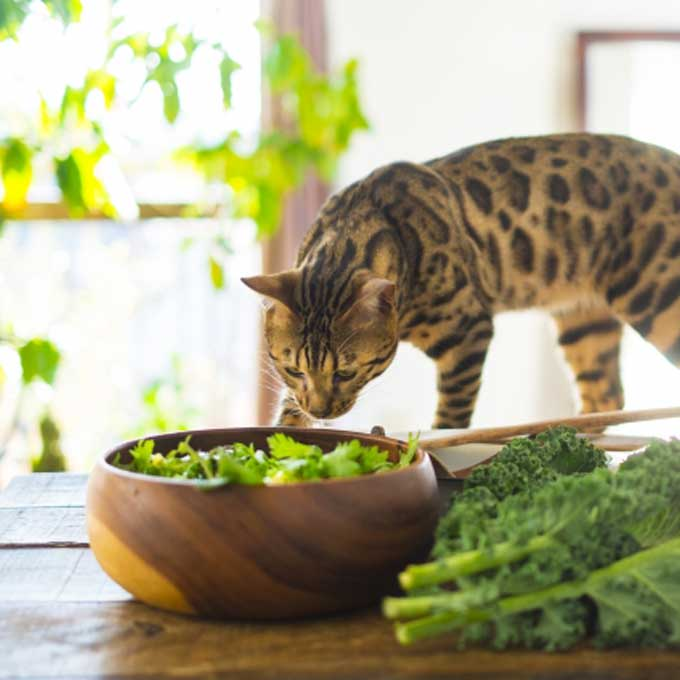 명절 음식 탐내는 고양이, 먹여도 되나요?