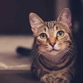 고양이가 좁고 어두운 장소에 있을 때 가만 둬야 하는 이유 3