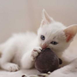 나이에 따라 놀아주는 법 다르다, 고양이 성장기별 놀이법