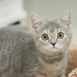일본 수의사가 말하는, 고양이와 살아야하는 8가지 이유