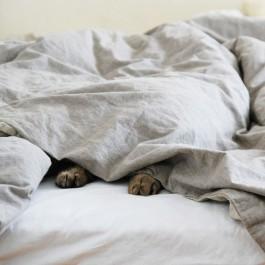 가끔, 사람가족보다 고양이가 좋은 7가지 이유