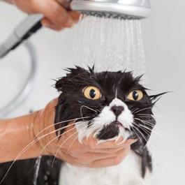 스트레스로 이어짐, 너무 지나치게 고양이를 보살펴주면 안 되는 이유 3