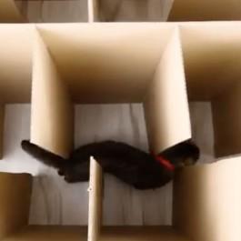 거대한 미로에 갇힌 고양이, 과연 빠져나올 수 있을까?