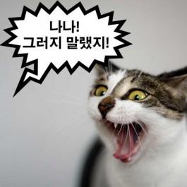 고양이에게 공포심 안 주며 'NO' 를 전하는 방법 6