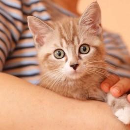 아무리 시간이 흘러도, 고양이가  꼭 기억하는  6 가지