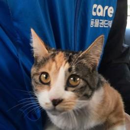 캣쏘우 흉내낸 악질 고양이 학대범 찾았다…케어, 정식 고발할 것