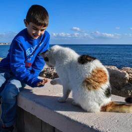 고양이가 아이에게 주는 네 가지 치유효과