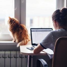 고양이를 외롭게 하는 집사 행동 4