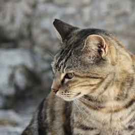 길고양이 중성화 수술 10년, 절반 가까이 감소