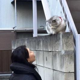 집사는 고양이를 닮았다