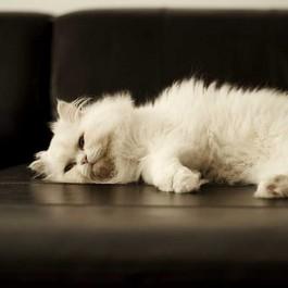 집에서 할 수 있는 고양이 건강체크법 4