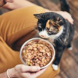 고양이도 밥이 보약,  당신이 놓치고 있을지 모르는 사료 잘 주는 법 6