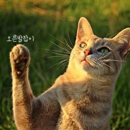 왼발잡이 고양이가 더 예민하다?