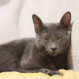 냥덕 집사들도 몰랐던 고양이 눈인사에 담긴 의미