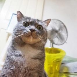 집사들이 잘 때 고양이가 잘하는 행동 4