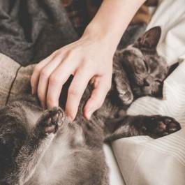 고양이와 더 깊게 마음을 나눌 수 있는 법 6