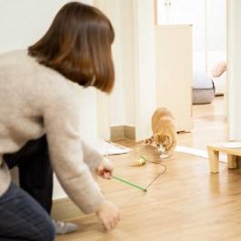 집사가 해주면 고양이가 기뻐하는 것 3