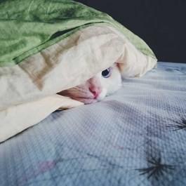 """""""헛 어디 있지?"""", 집안에 있는 고양이 찾는 법 6"""